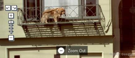 dogbalcony.jpg
