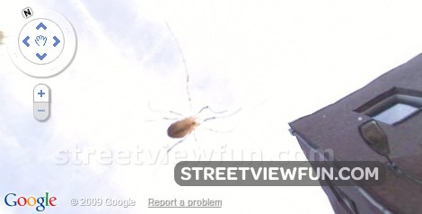 Scary bug on Street view