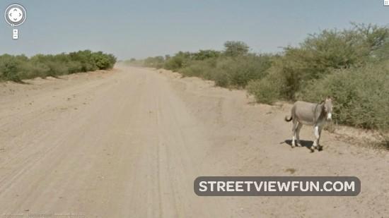 Google Maps Streetview Car Hit A Donkey In Botswana