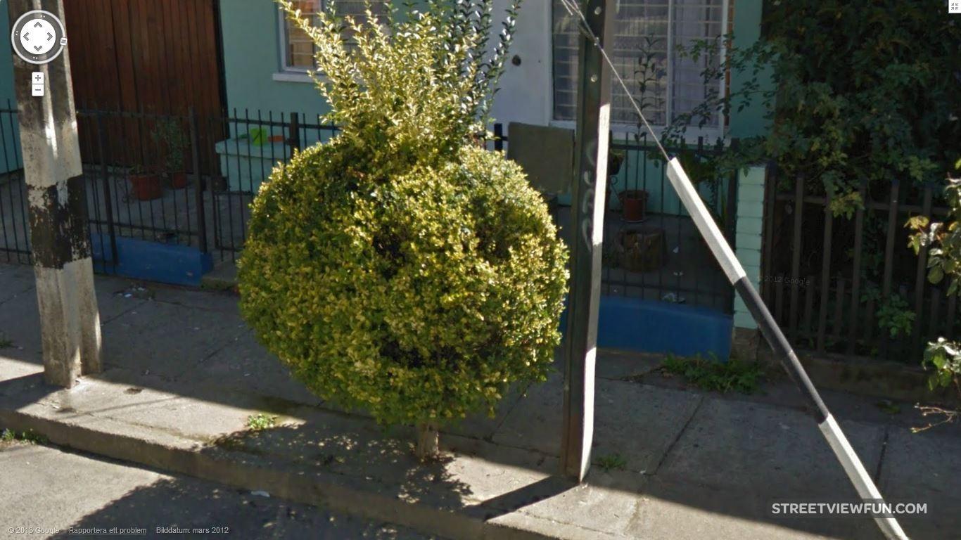 Pics Photos Funny Topiary