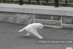 Two legged cat spotted on Google Street View (fake)