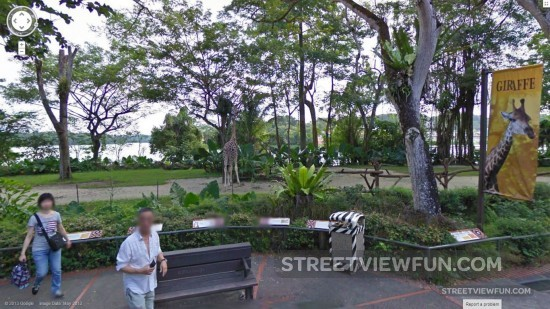 singapore-zoo-google-street-view