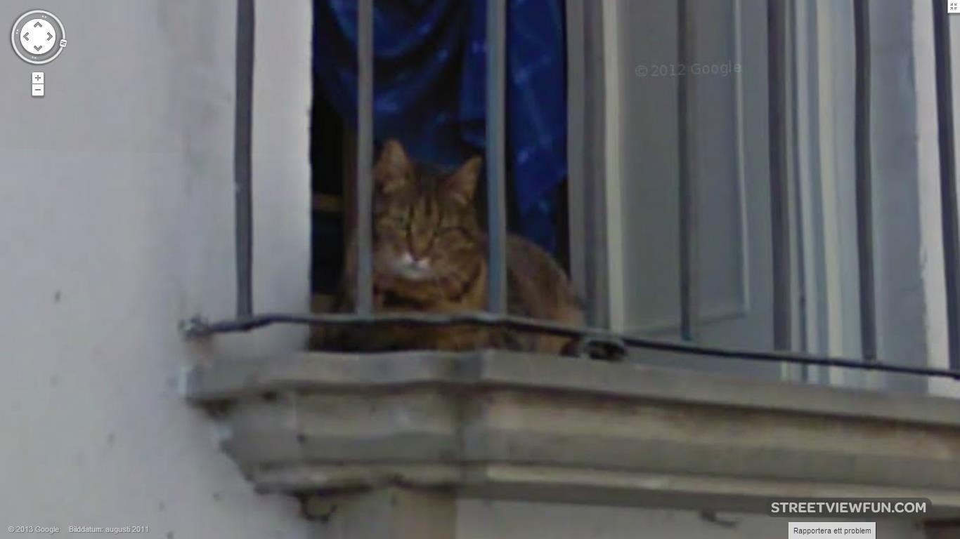 grumpy-cat-is-on-google-street-view