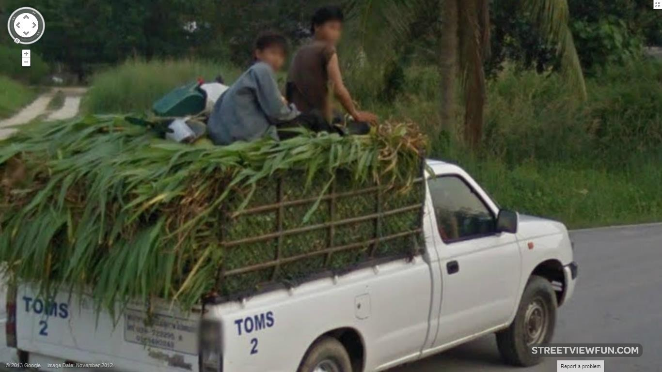 riding-on-sugarcane