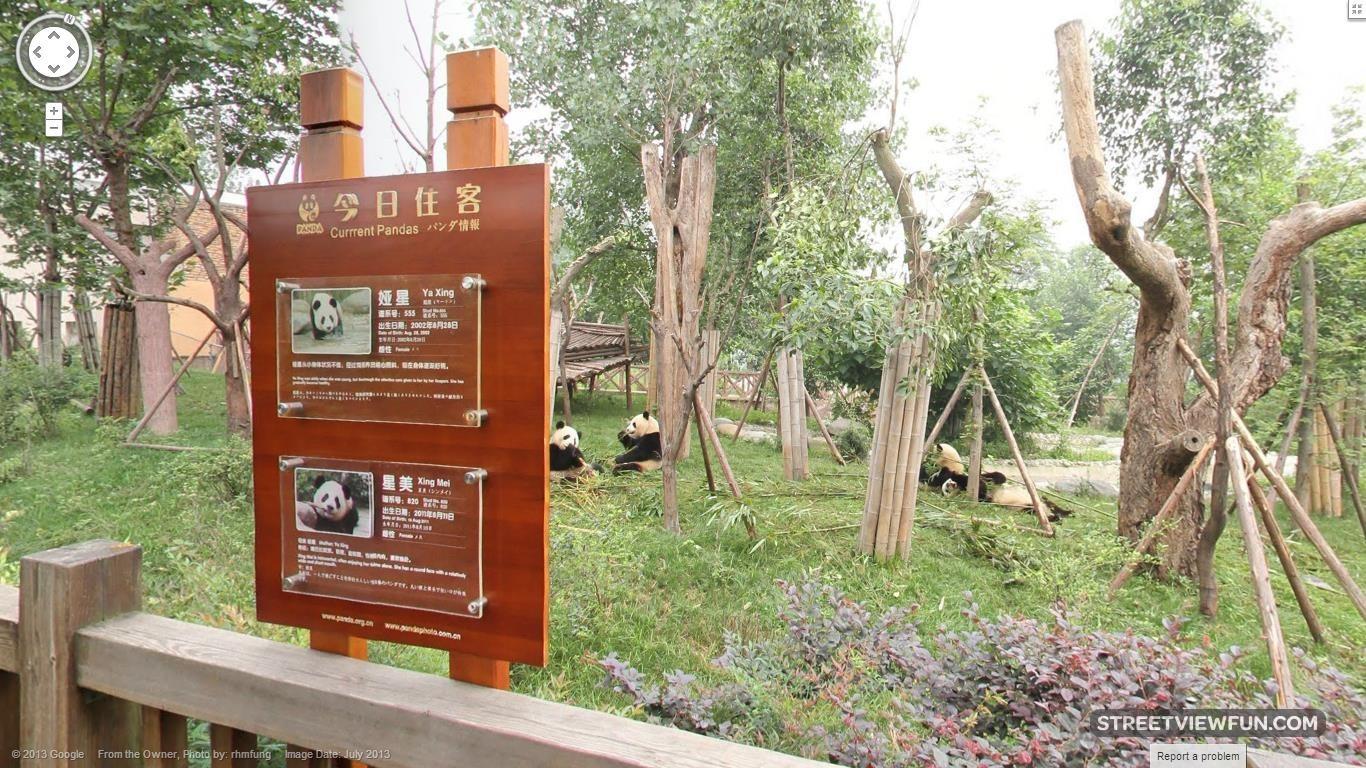 giant-panda-china