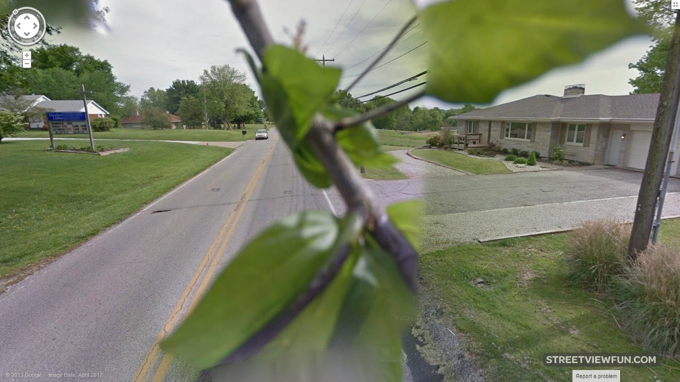 tree-branch-google-street-view2