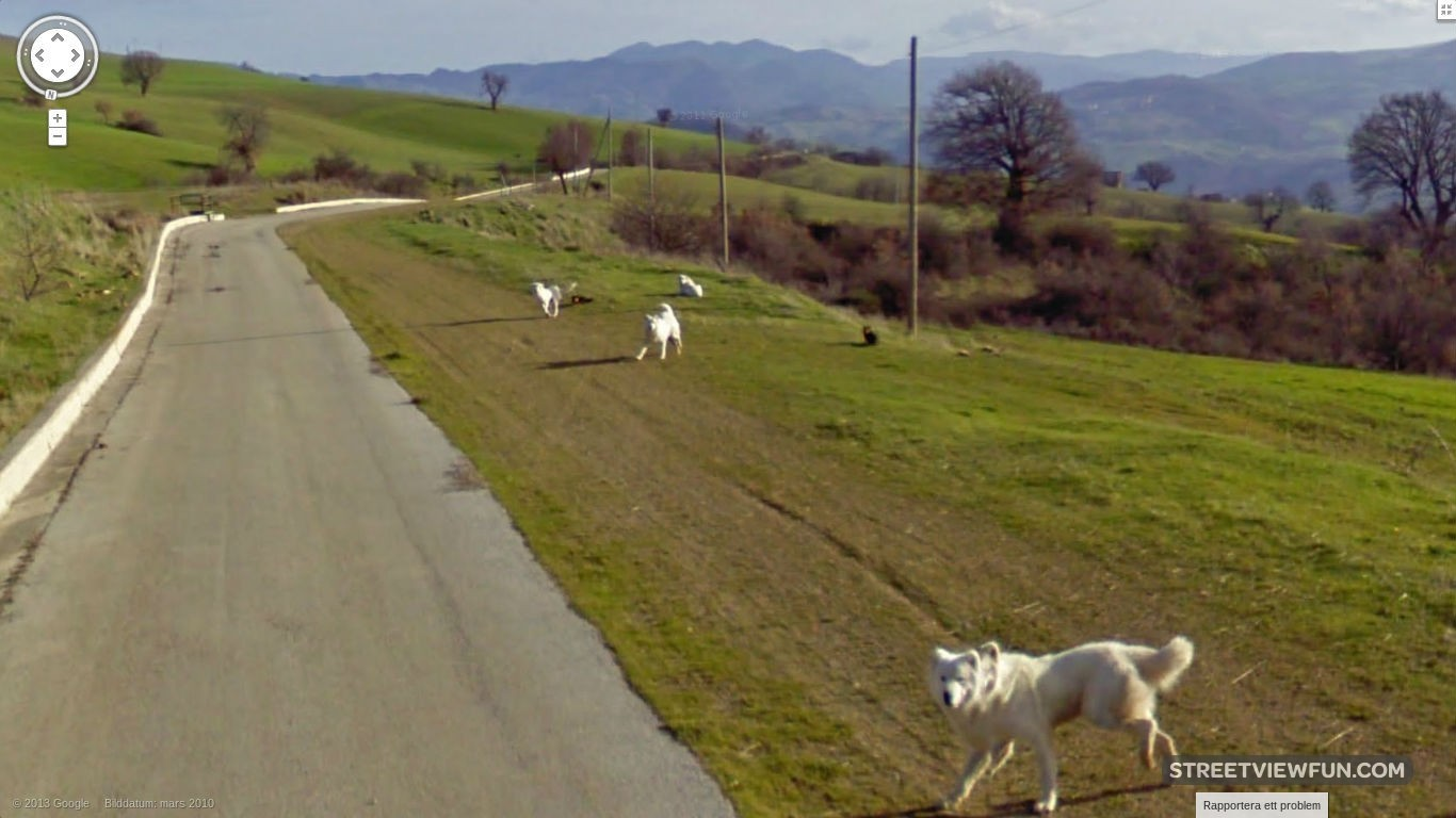 dogs-chasing-google-street-view