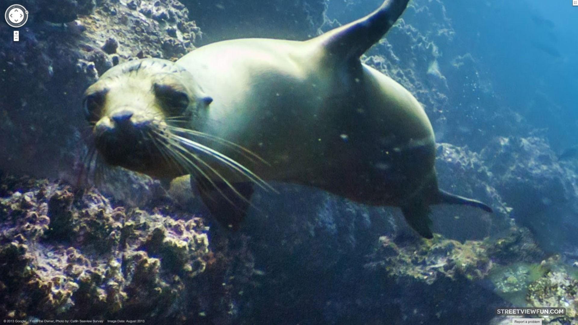 Streetviewfun Galapagos Sea Lion Playing With Street View