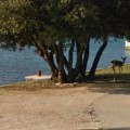 beach-fawn