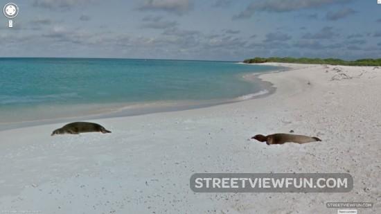 lisianski-island-hawaii3
