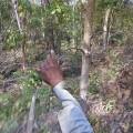 cambodia-forest1