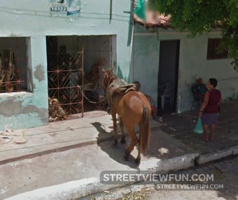horse-store