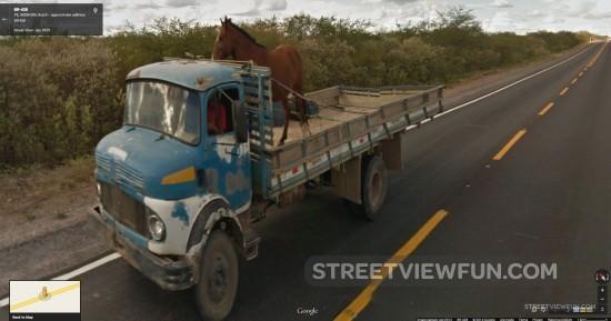 horse-trailer-no