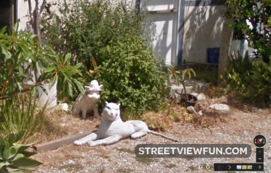 big-white-cat