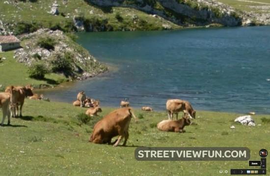 cow-ostrich