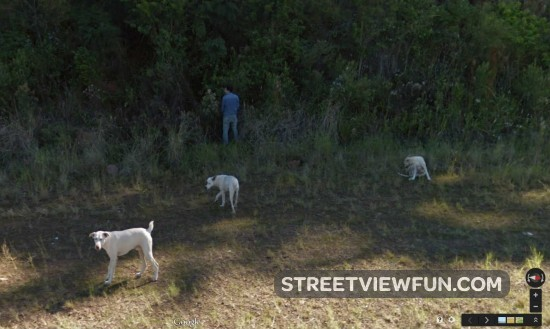 pee-stop-with-the-dogs2