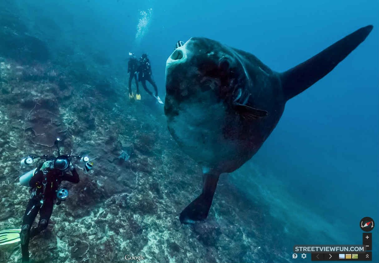 Streetviewfun discover the magic of the ocean on google for Mola mola fish