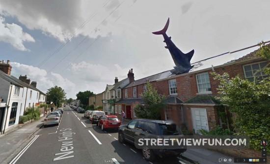 shark-jump