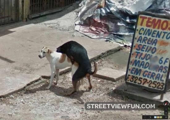 dogs-street