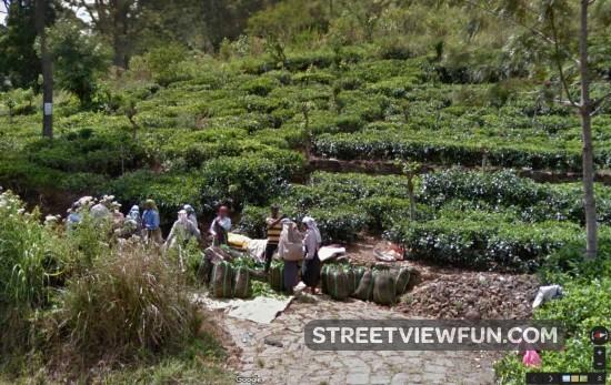 tea-sri-lanka-google-street-view