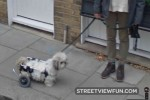 Walking frame for a little dog