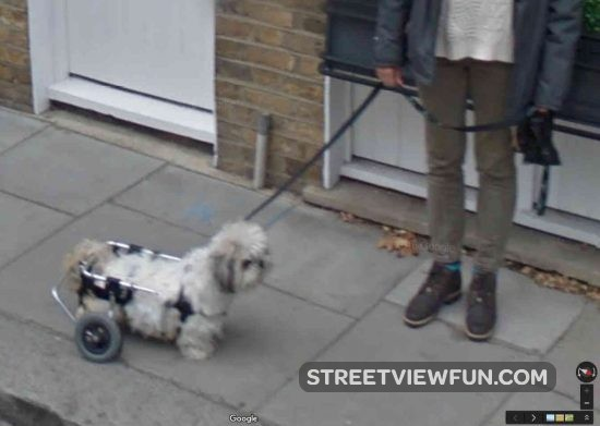 walking-frame-dog