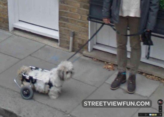 walking-frame-dog