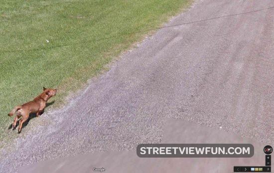 dog-chasing-google02
