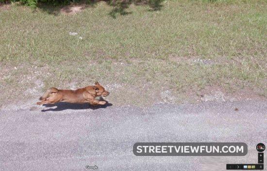 dog-chasing-google3