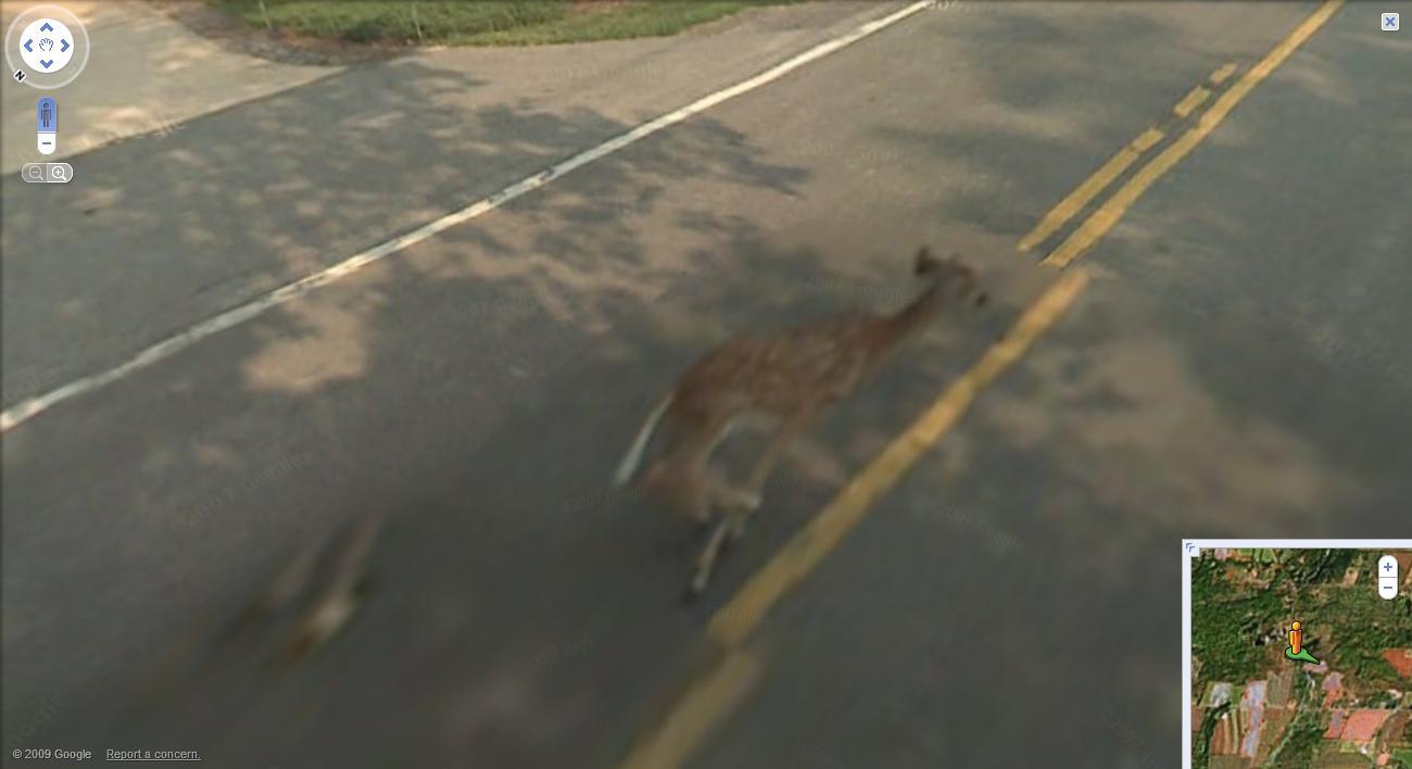 Scary deer