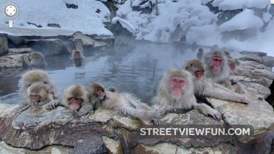 Funniest animals on Google Street View