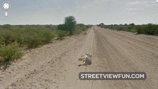 Donkey in Botswana