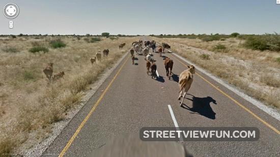 movingthroughbotswana