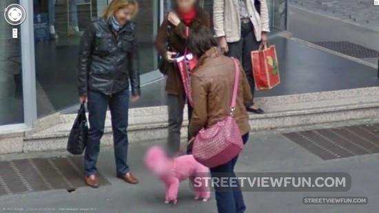 pink dog street view