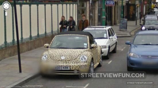leopardbeetle