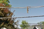 Squirrel hanging from power lines