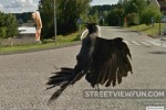 Crow scared by Google Street View, lose pizza slice