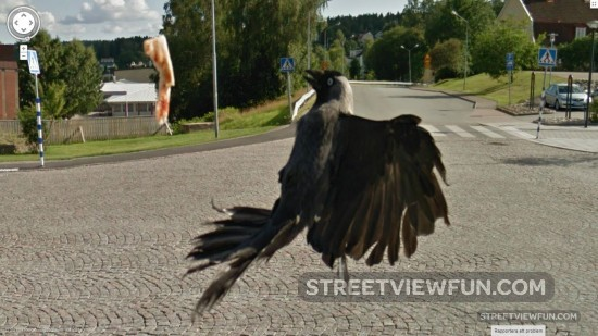 crow-lose-pizza-slice-street-view