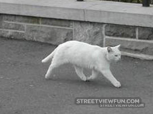 twoleggedcat-real