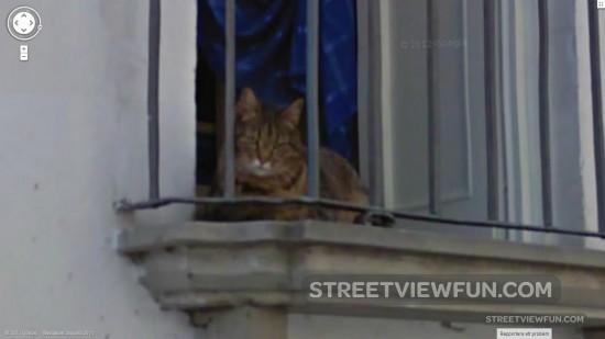 grumpy-cat-is-on-google-street-view