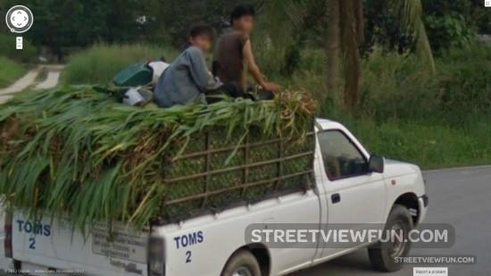 riding-on-sugarcane
