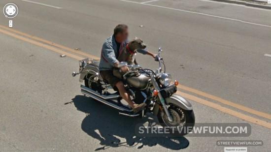 biker-dog