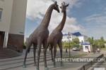 Giraffes in Russia