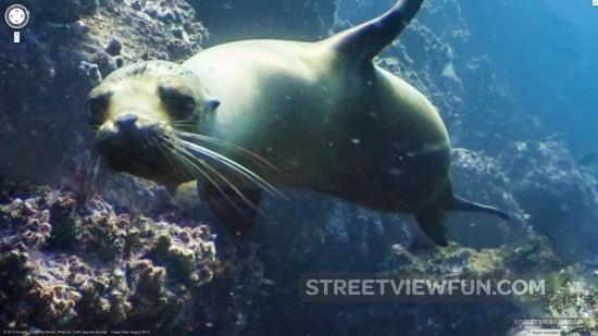 sea-lion-street-view