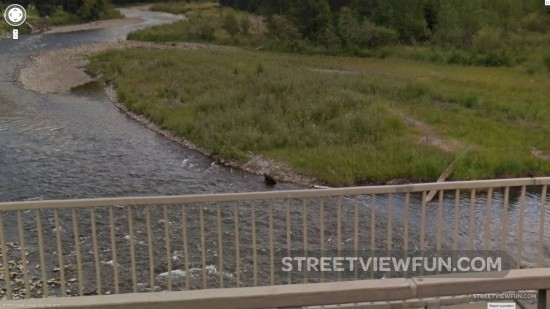 river-bear2