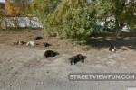 Resting Dog-Clan in Odessa