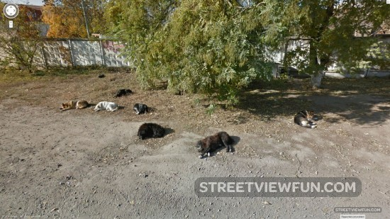 dogs-rest-ukraine