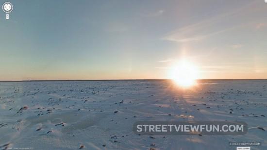 polar-bear-street-view2
