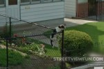 This dog is on the fence