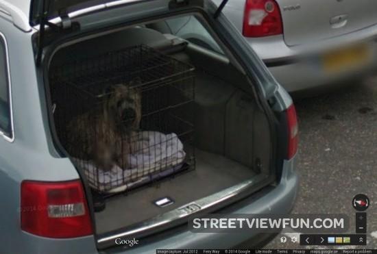 dog-prisoner